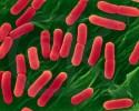 imagen Reproducción de las bacterias
