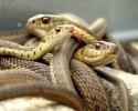 imagen Serpientes