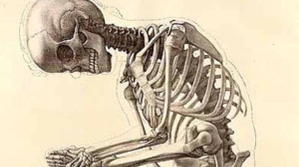 Sobre Anatomia